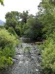Creek at Taos