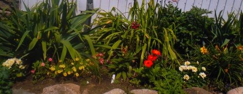 Mid-July garden