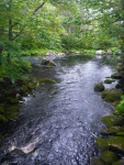 The Tusket River in Nova Scotia is brownish and bubbly, due to all the peat under the water.
